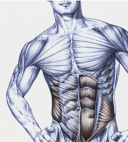 musculation-exercices-abdominaux