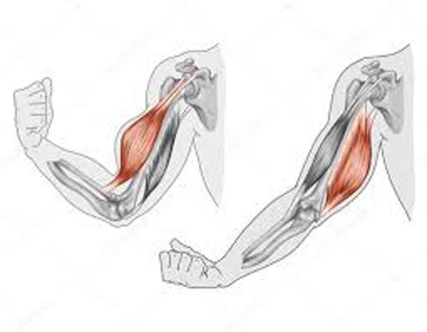 étirement-biceps-triceps
