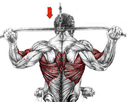 dos-musculation-exercice