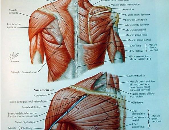 Fiches-Techniques-Epaules