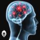 connexion esprit-muscles