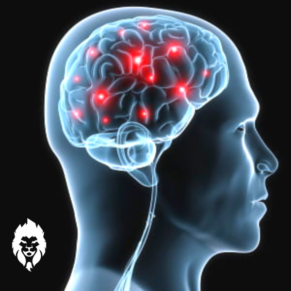 the mind-muscles connection