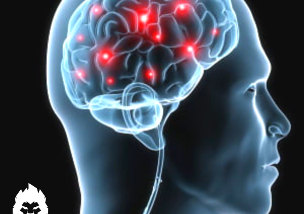Mind-muskel-anslutningen
