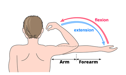 Arm and foream